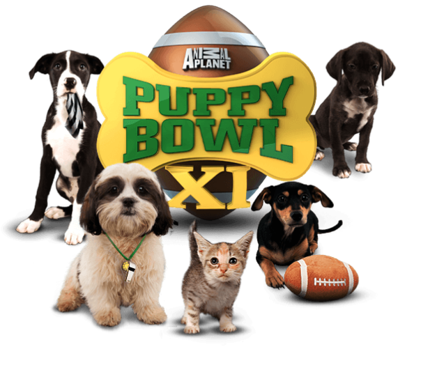 Puppy Bowl Football Super Bowl Party